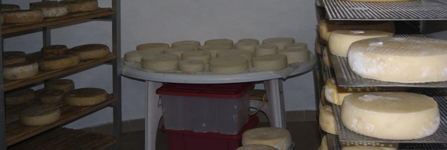 Ein Ausflug in den Norden bringt einem die Käsespezialitäten von Gran Canaria näher.