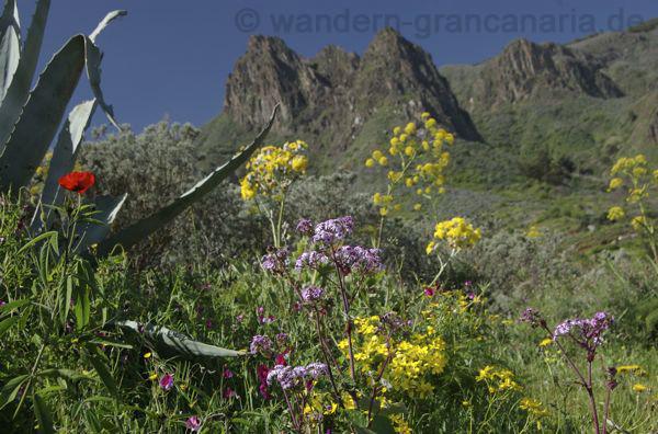 Ausflugsziele im Osten von Gran Canaria