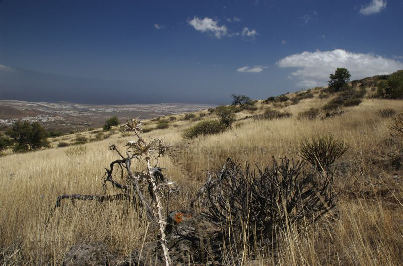 Wandern im Oktober auf Gan Canaria in noch eher trockener Landschaft
