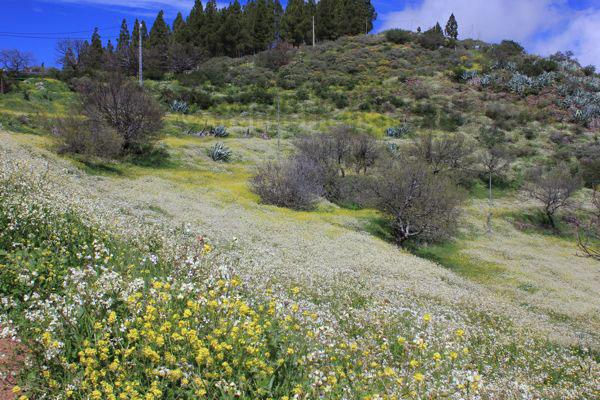 Landschaftblutezentrum