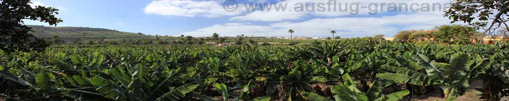 BananenplantageFincaArucas
