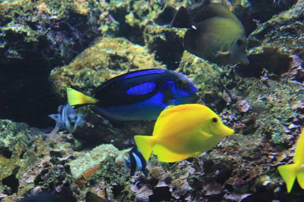 Bunte Fische im Aquarium vom Palmitos Park