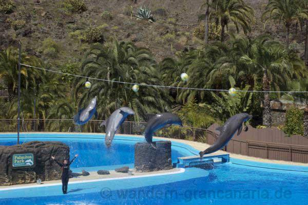 Delfine im Delfinarium auf Gran Canaria