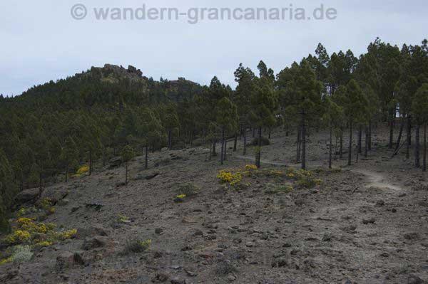 Steiniger Wanderweg / Wanderpfad auf Gran Canaria