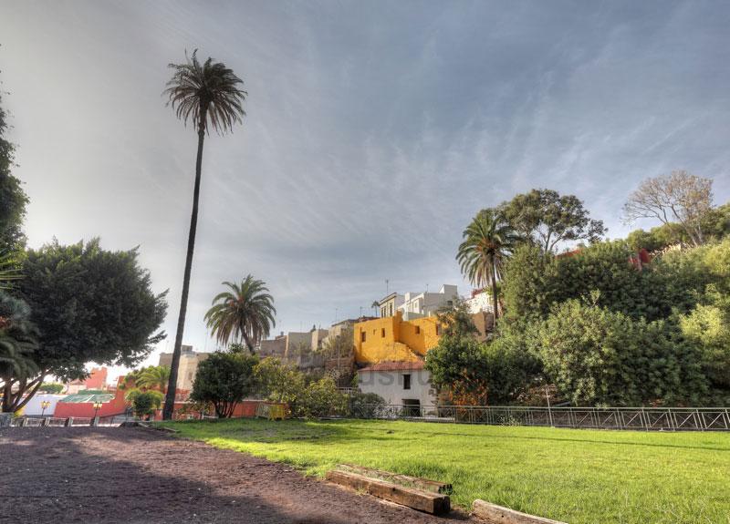 HÖchste Palme von Gran Canaria in Ingenio