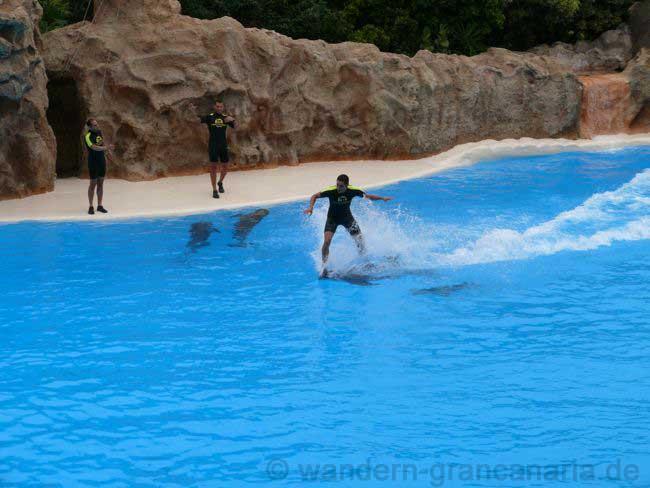 Delfinshow im Loro Park