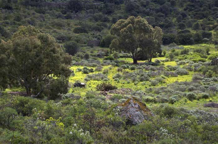 Blühende Kleewiese im Krater von Bandama