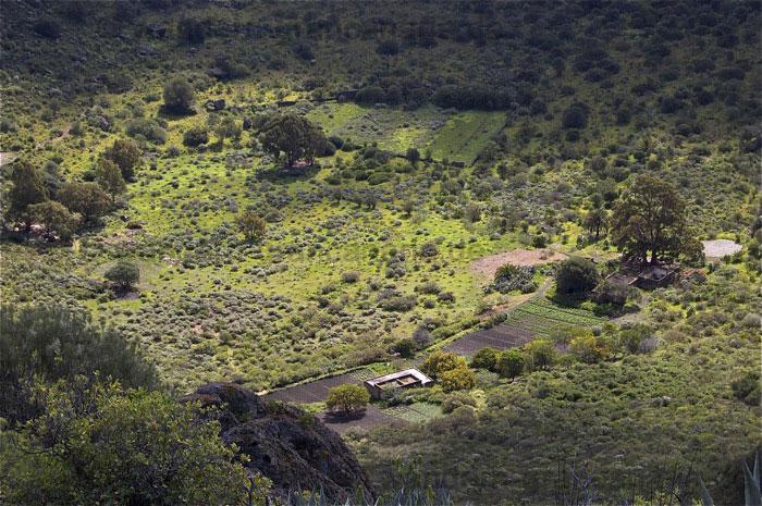 Kratergrund des Bandama im Winter