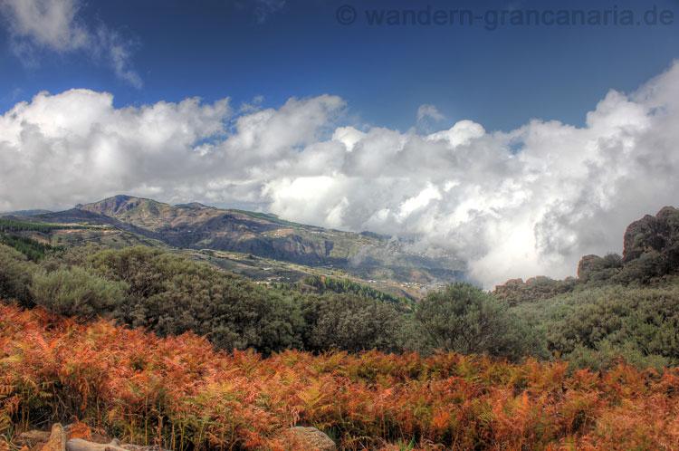 Wanderung im November, die Blätter verfärben sich gelb orange auf Gran Canaria