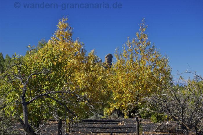 Wandern im Dezember, die Blätter der Kastanien verfärben sich gelb