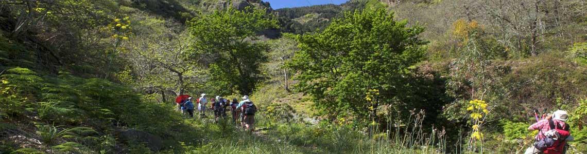 Geführte Tageswanderungen auf Gran Canaria