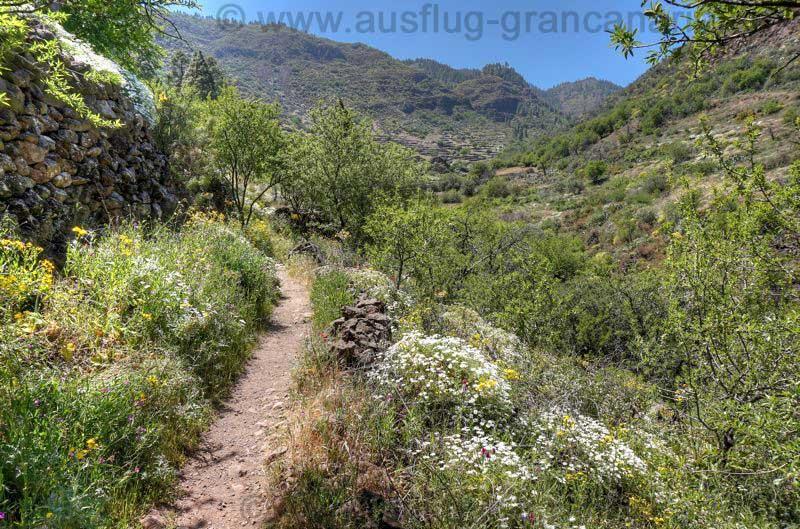 Wanderweg mit Margeriten und Hahnenfuß
