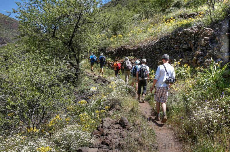 Wandergruppe der geführten Wanderung auf dem Bergabweg im Tal von Guayadeque.
