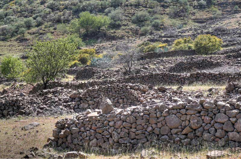 Verfallene Terrassenfelder mit Trockenmauern im Barranco von Guayadeque.