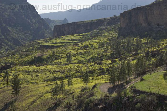 Gelbe Blühte im hinteren Teil vom Tal von Soria.