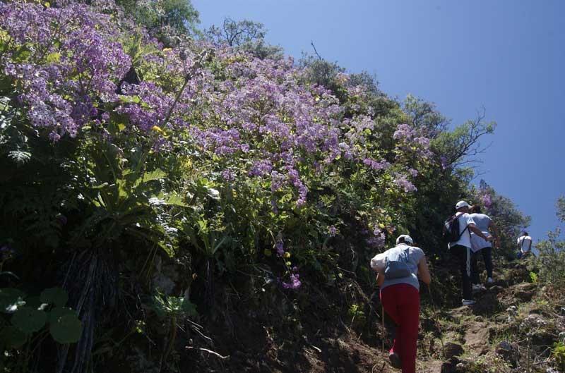 Rosa violette Blühten auf der Wandertour zur Degollada de Becerra