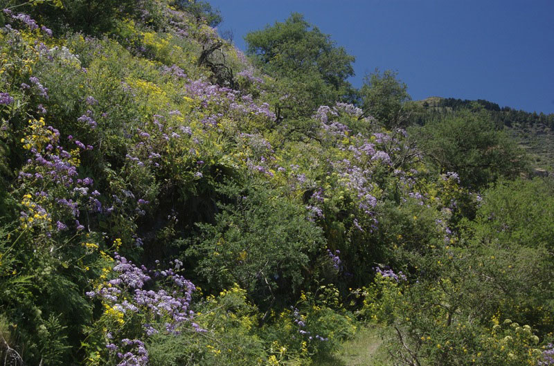 Im Frühjahr blühen gelber Hahnenfuss und andere gelbe Blütenpflanzen auf der Wanderung.