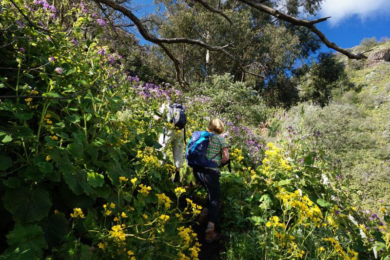 Blütendickicht beim Aufstieg der Wanderung im Nordosten von Gran Canaria