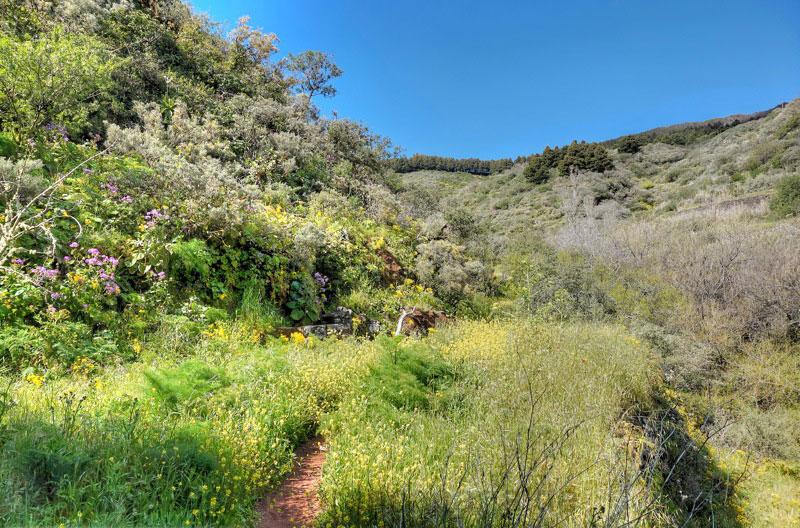 Blumenwiesen beim oberen Aufstieg des Barranco de la Mina