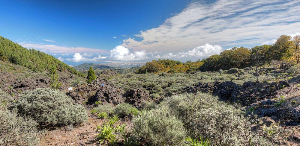Ausflug auf der Nordseite von Gran Canaria. Alter Lavafluss mit Ginster und Kastanien, im Hintergrund Las Palmas