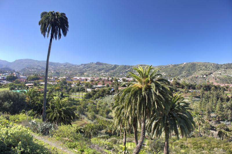 Palmen und grüne Landschaft im Winter im Südosten von Gran Canaria bei Santa Brigida