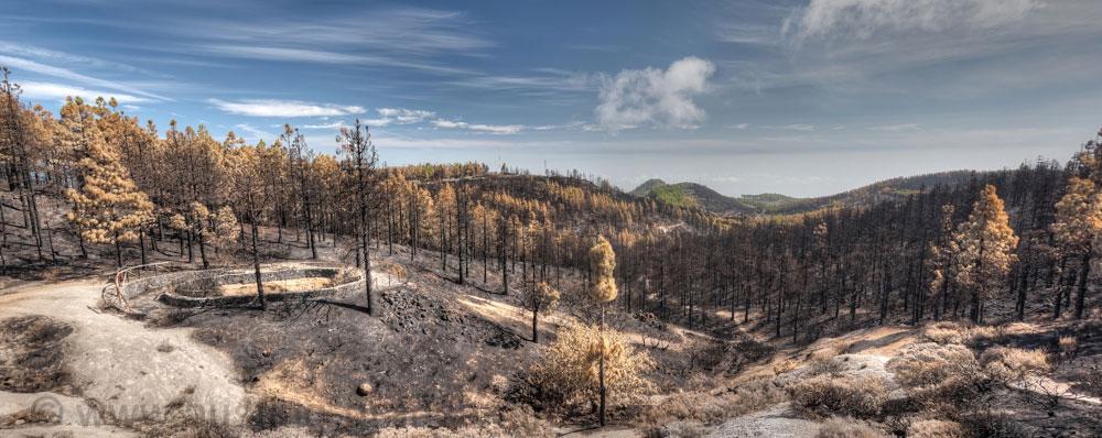 Schäden Waldbrand Gran Canaria, ösltlich Pico de las Nieves